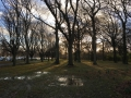 Hagley Park in the Late Afternoon