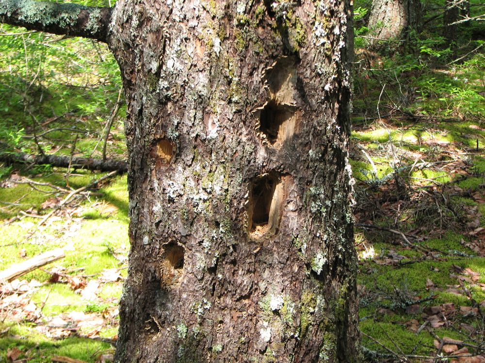 Those Woodpeckers