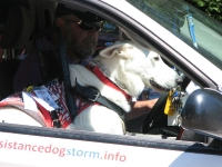 The Assistance Dog Storm